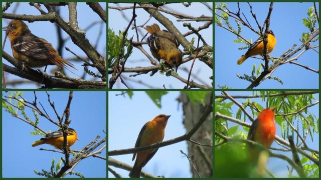 Buttermilk Falls SP_birds